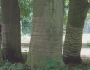Gefesselte Elefantenfüße