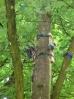 Rauschende Baum-Kulisse